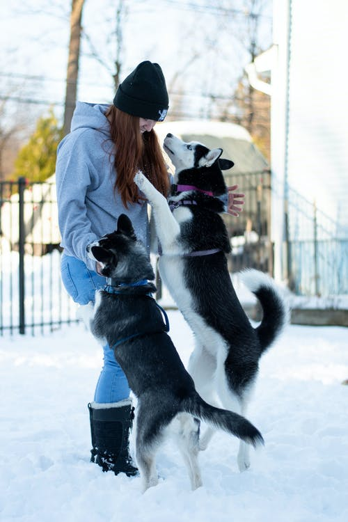 Playful Dogs Bonds with their Owner