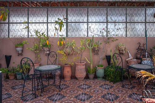 Interior of cozy cafe with forged tables and chairs and floor covered with zellij mosaic tiles decorated with assorted potted exotic plant