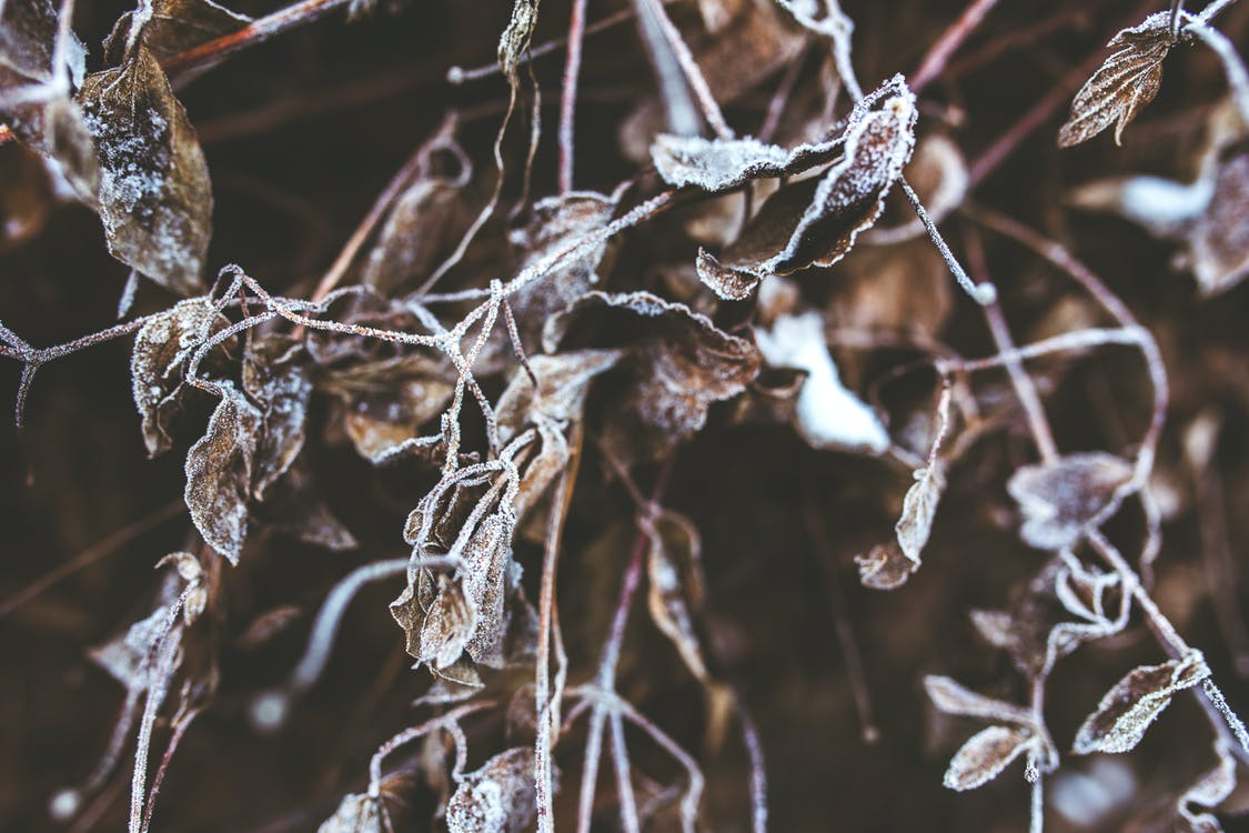 frost, frostig, fryst
