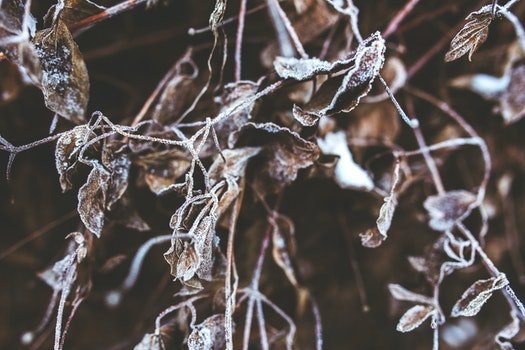 Frozen branches and withered leaves