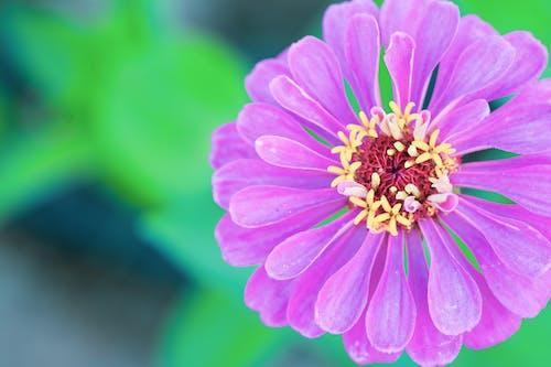 Ảnh lưu trữ miễn phí về cú đánh gần, chụp cận cảnh, hệ thực vật, hoa