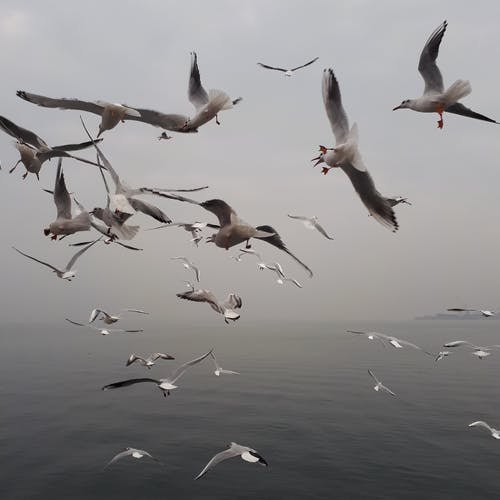 A Flock of Birds Fly in a Gloomy Weather