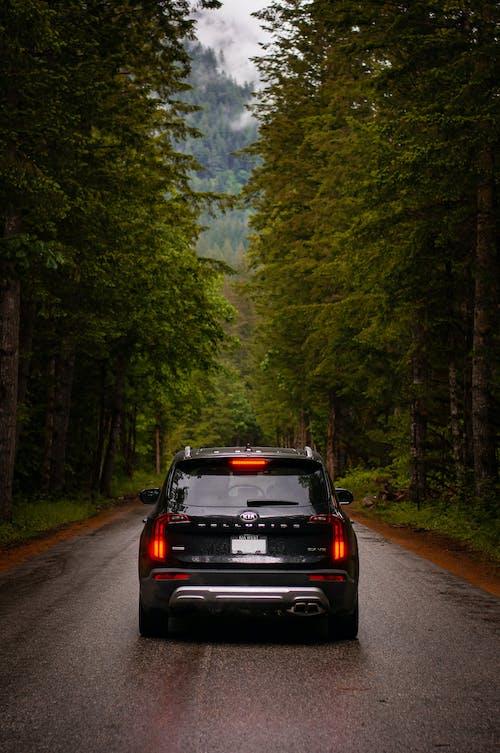 Black Car on Road in Between Trees