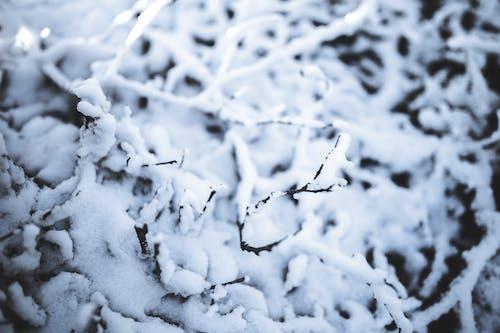Ảnh lưu trữ miễn phí về lạnh, mát mẻ, mùa đông, tối giản