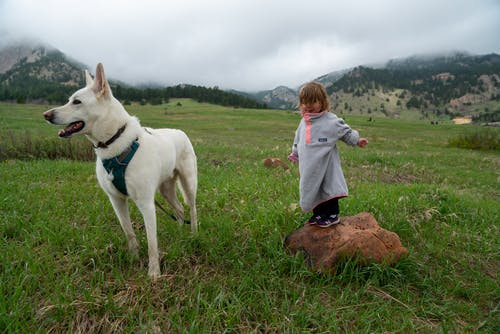 A Toddler Standing on a Rock Next to a White Dog