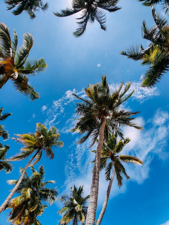 Low Angle Photography of Palm Trees Under Blue Sky