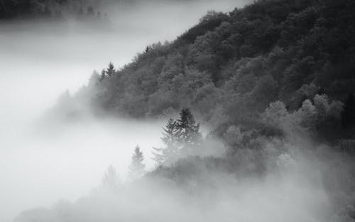 A Grayscale Photo of a Forested Mountain