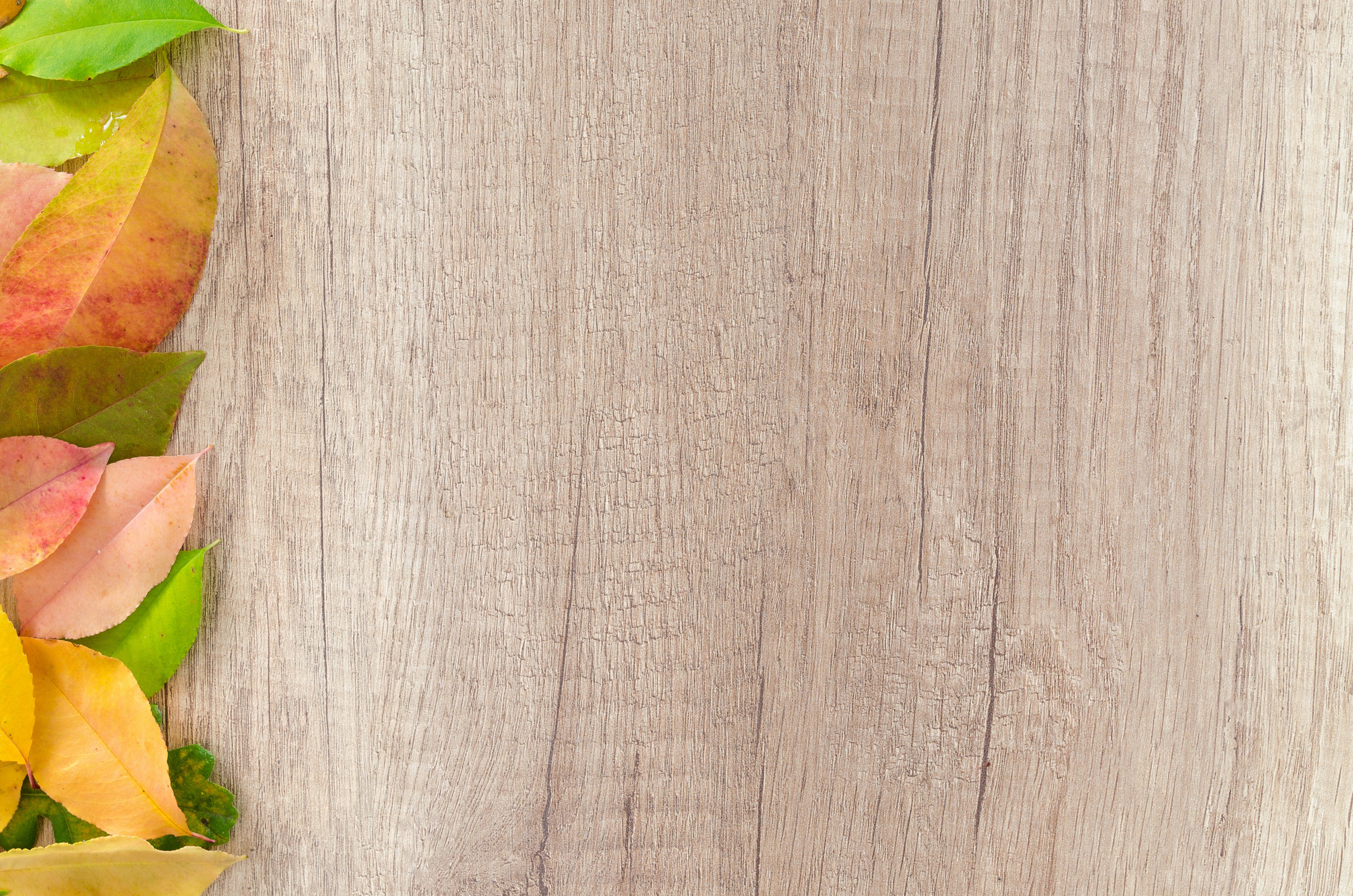 Free stock photo of wood, nature, red, dry