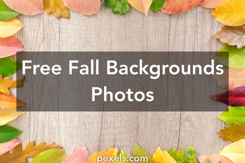 1000 engaging fall backgrounds photos pexels free stock photos