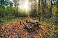 bench, dawn, landscape