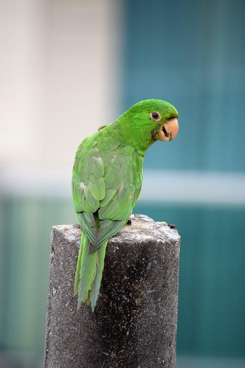Grüner Vogel Auf Grauem Betonpfosten