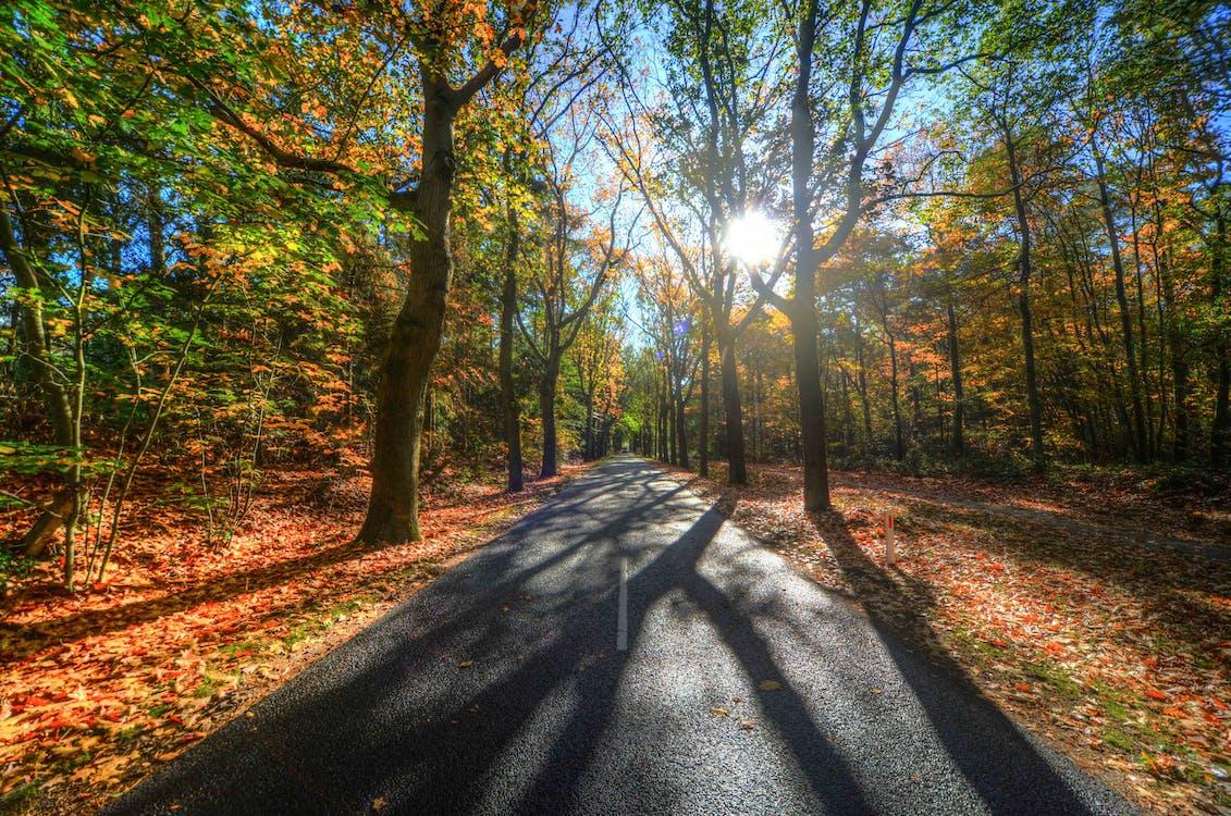 Foto stok gratis alam, alami, bayangan