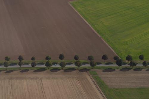Foto profissional grátis de área, árvores, automóvel, campina