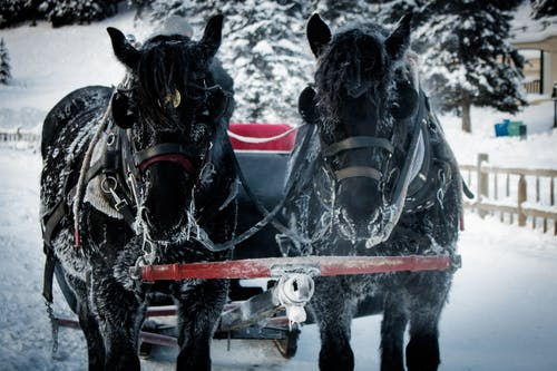 Free stock photo of sled, winter