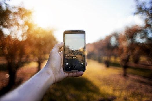 Free stock photo of hand, camera, smartphone, trees