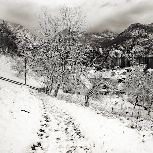 Free stock photo of black amp white, foot path, footprints