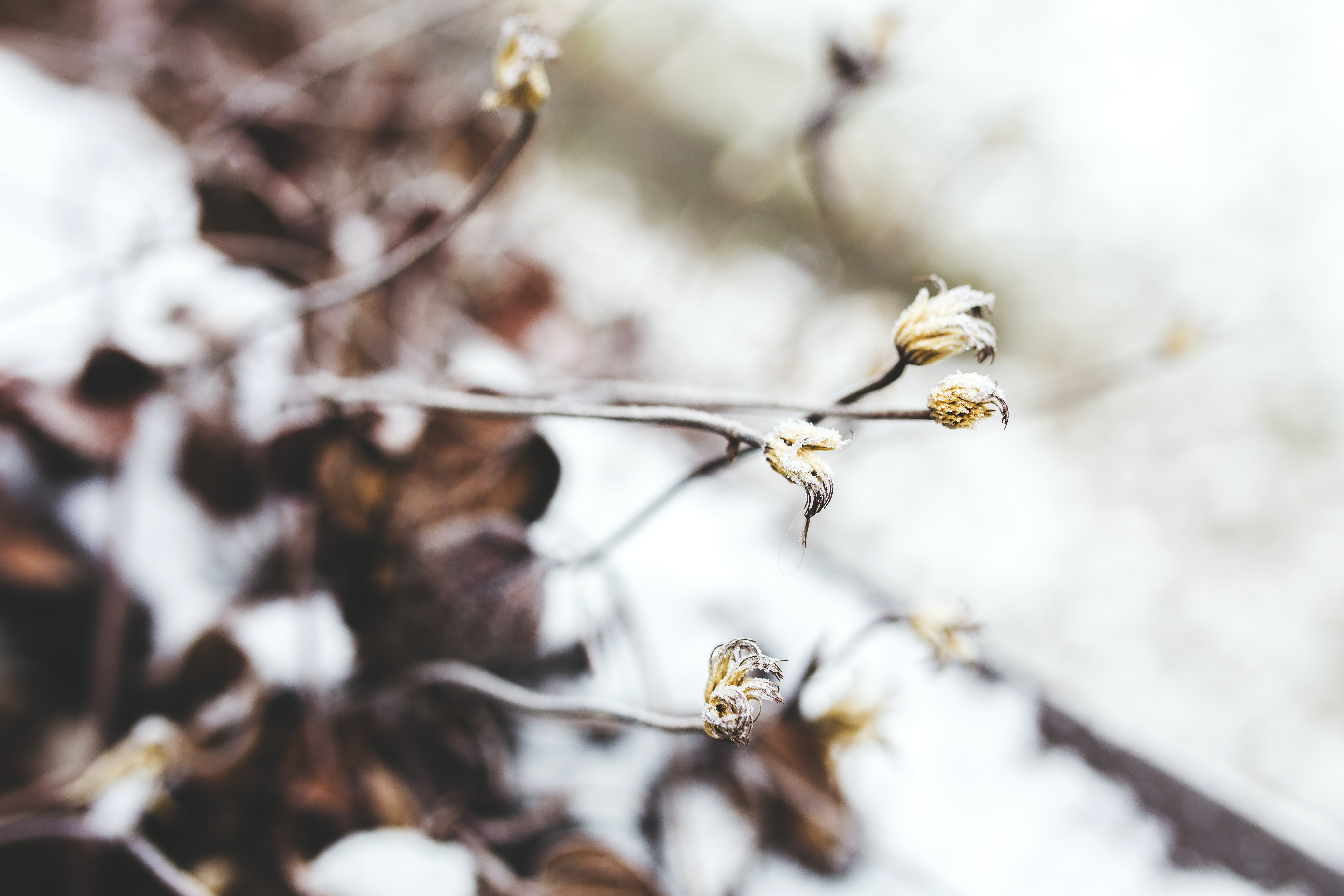 Little Withered Flowers