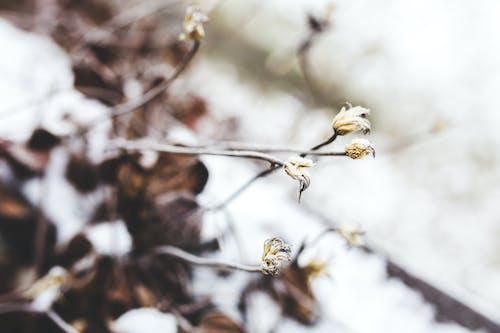 Fotos de stock gratuitas de congelado, detalle, flor, flores