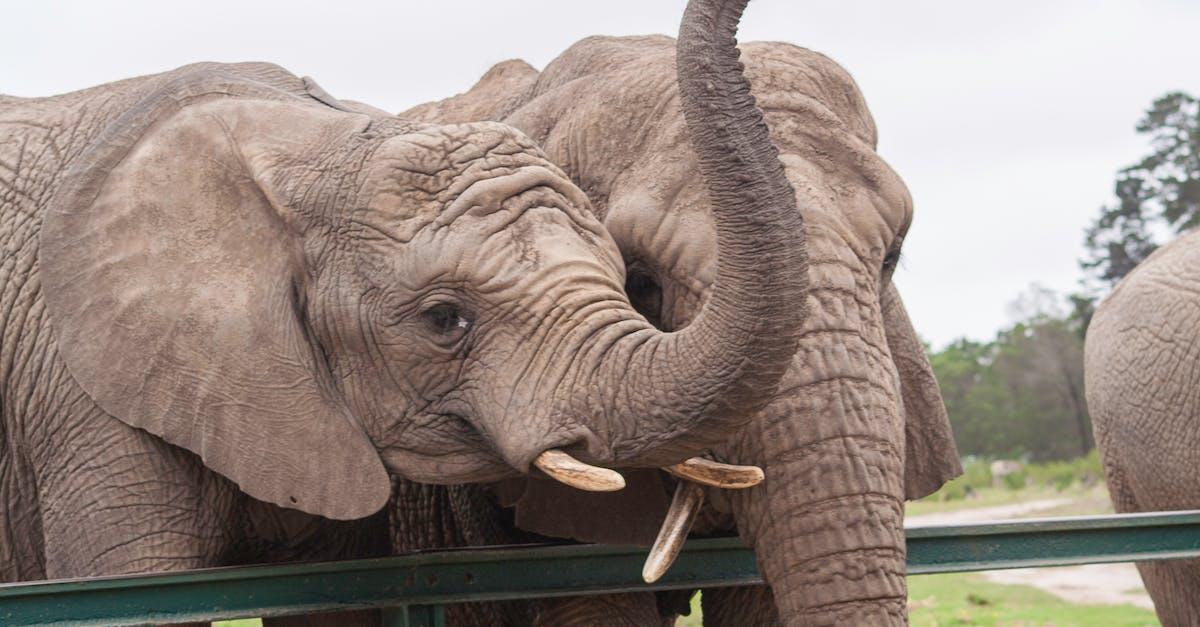 архитектуру картинки слон хобот умения логически мыслить