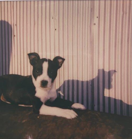 Grainy Photo of a Dog