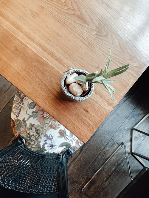 From above of fresh succulent plant placed in pot on wooden table in light apartment in daytime