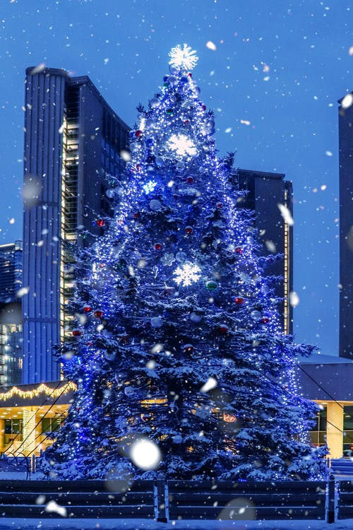 Christmas Tree With String Lights Near High Rise Buildings during Night Time