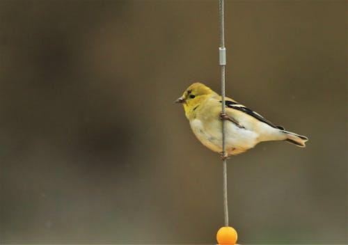 Photo Of A Yellow Bird