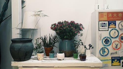 Free stock photo of boho, flower, flowerpot