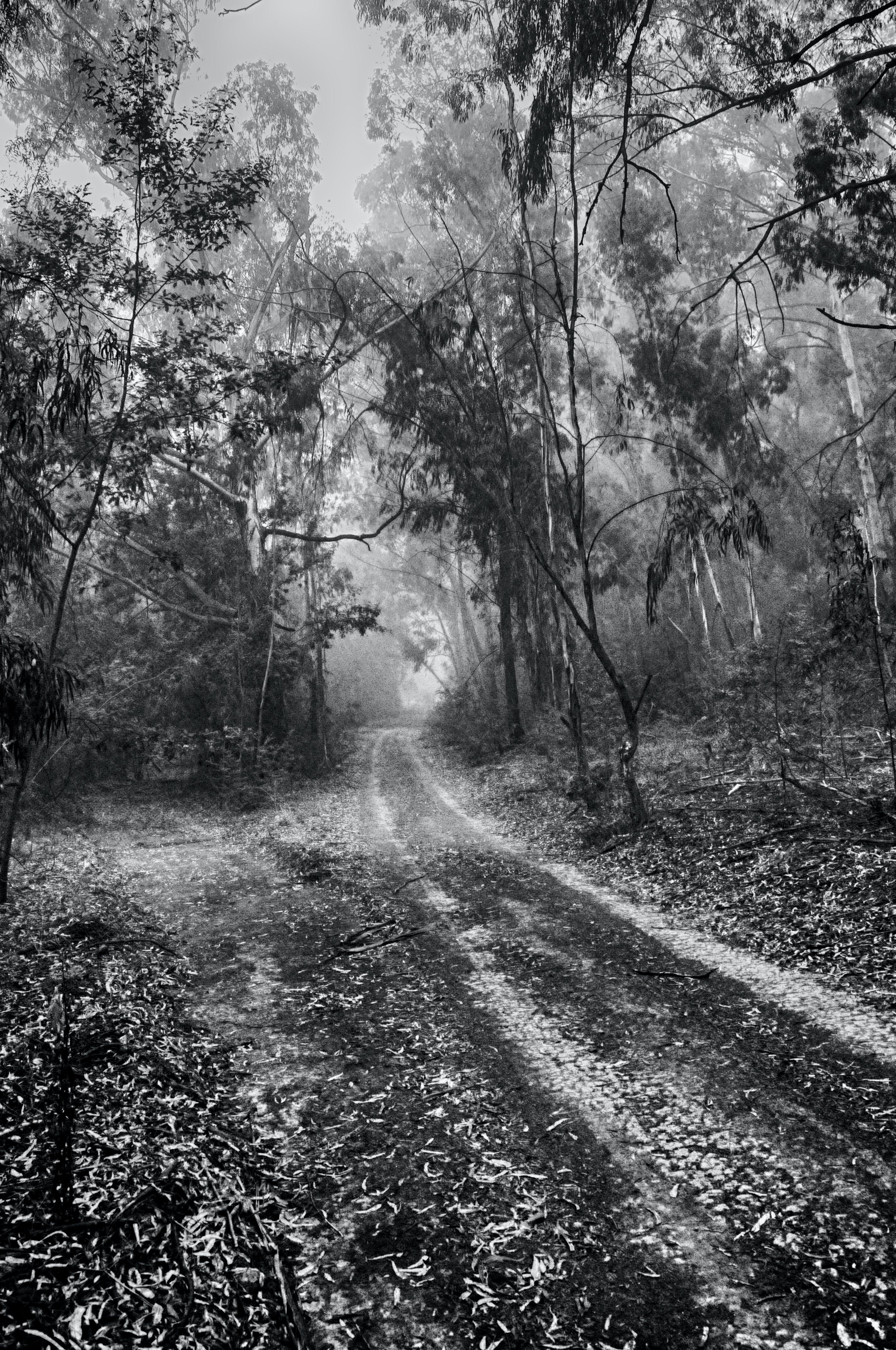 Free stock photo of fog, foggy, forest, mist