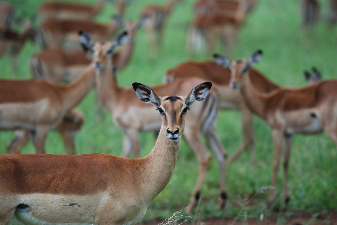 Animales-actitud-diferencia-salvaje-domestico