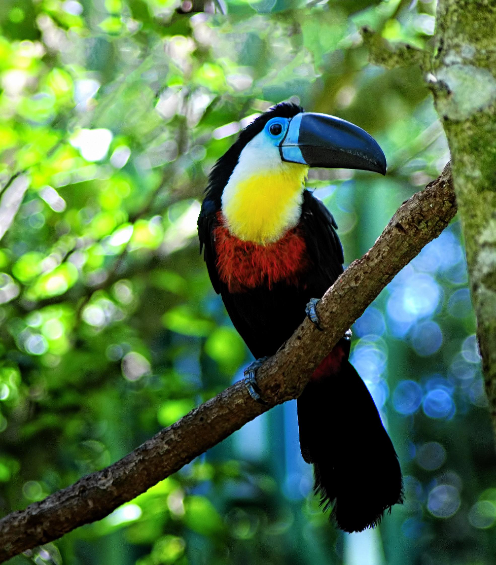 μεγάλο πουλί πλάγια