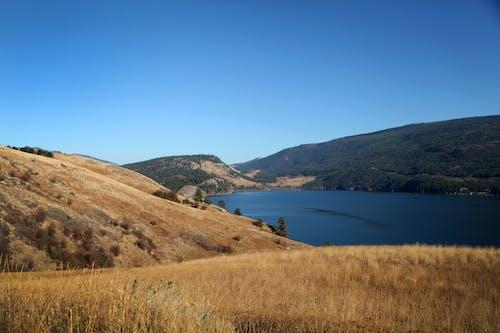 Free stock photo of blue skies, blue sky, grassland