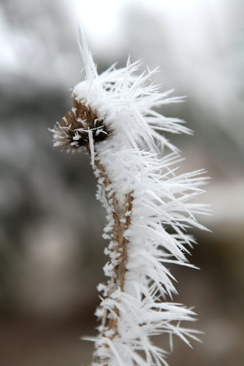 Free stock photo of cold, dead, flower