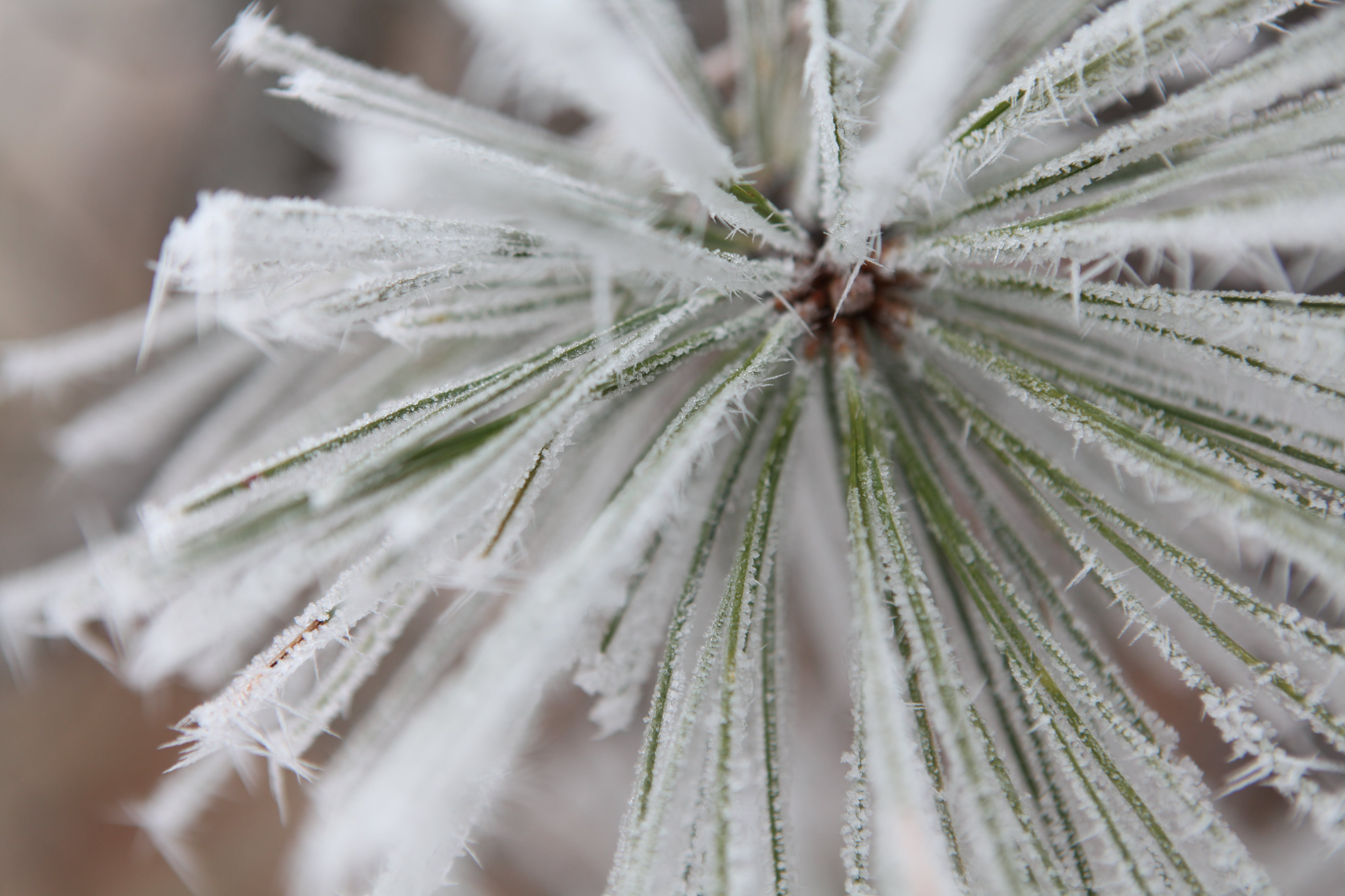 Free stock photo of autumn, fall, frost, hoarfrost