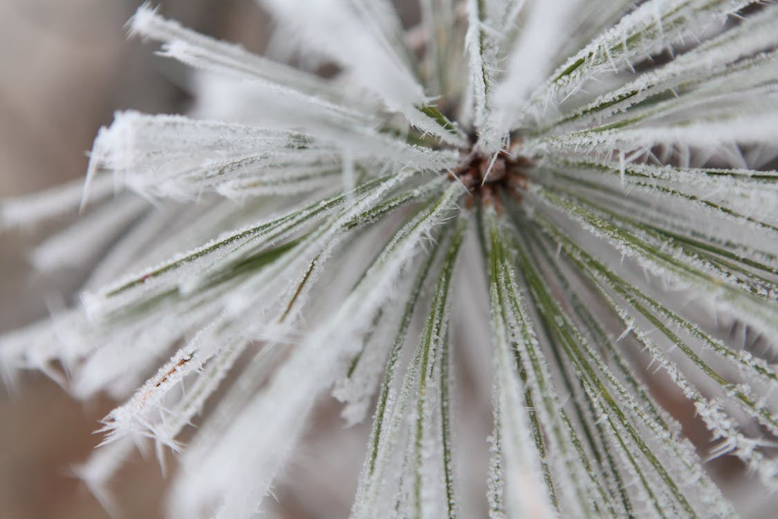 Free stock photo of frost, hoarfrost, ice
