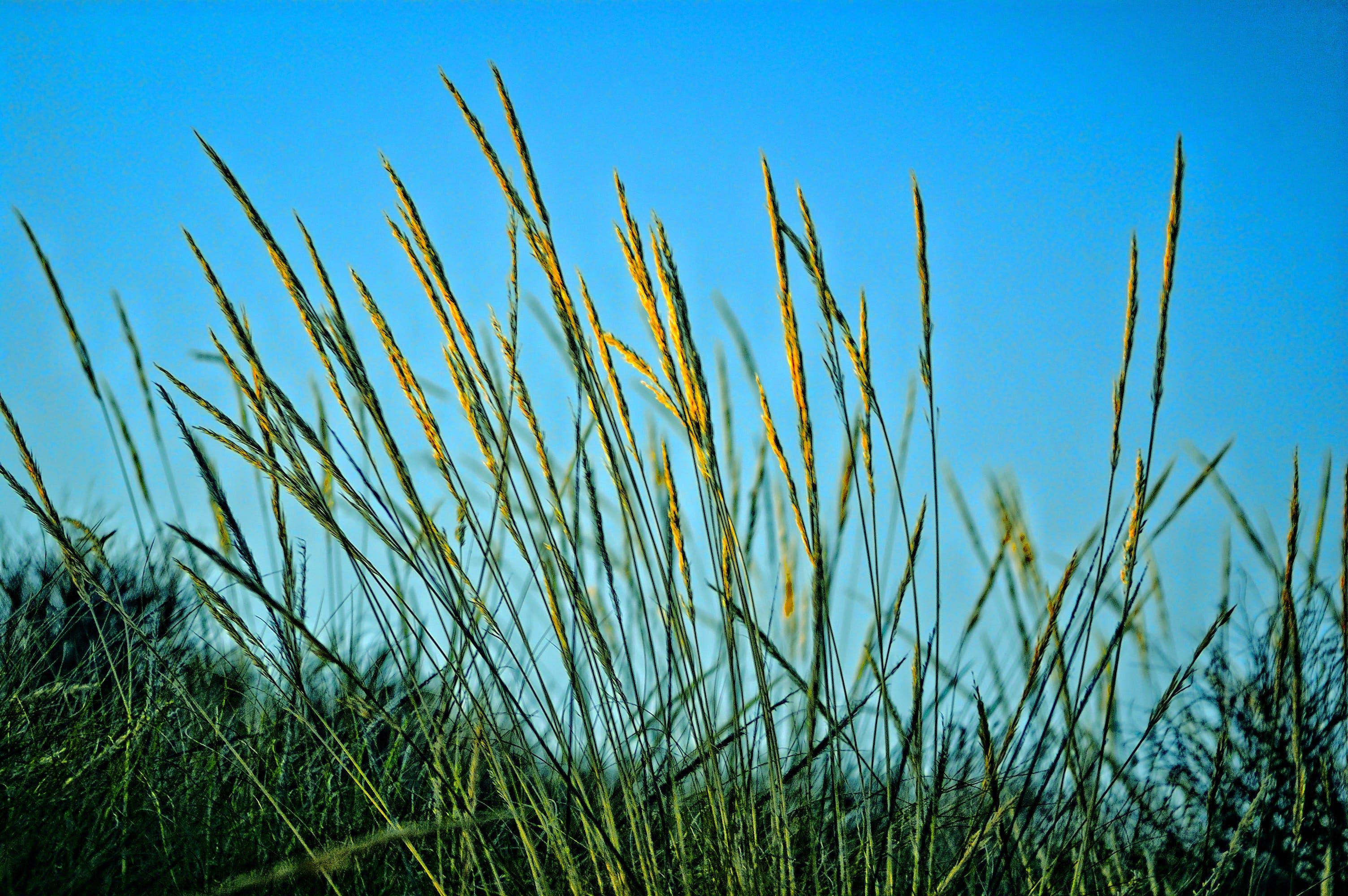 Kostenloses Stock Foto zu farbe, feld, flora, gras
