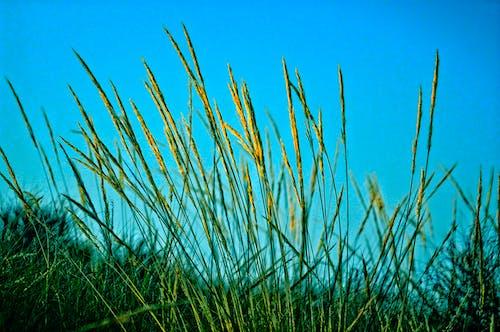 Ilmainen kuvapankkikuva tunnisteilla aurinko, heinäpelto, kaisla, kasvikunta