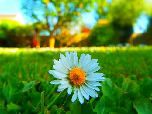 Бесплатное стоковое фото с газон, деревья, желтый, красивый