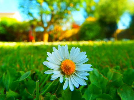 Kostenloses Stock Foto zu landschaft, natur, sonnig, feld