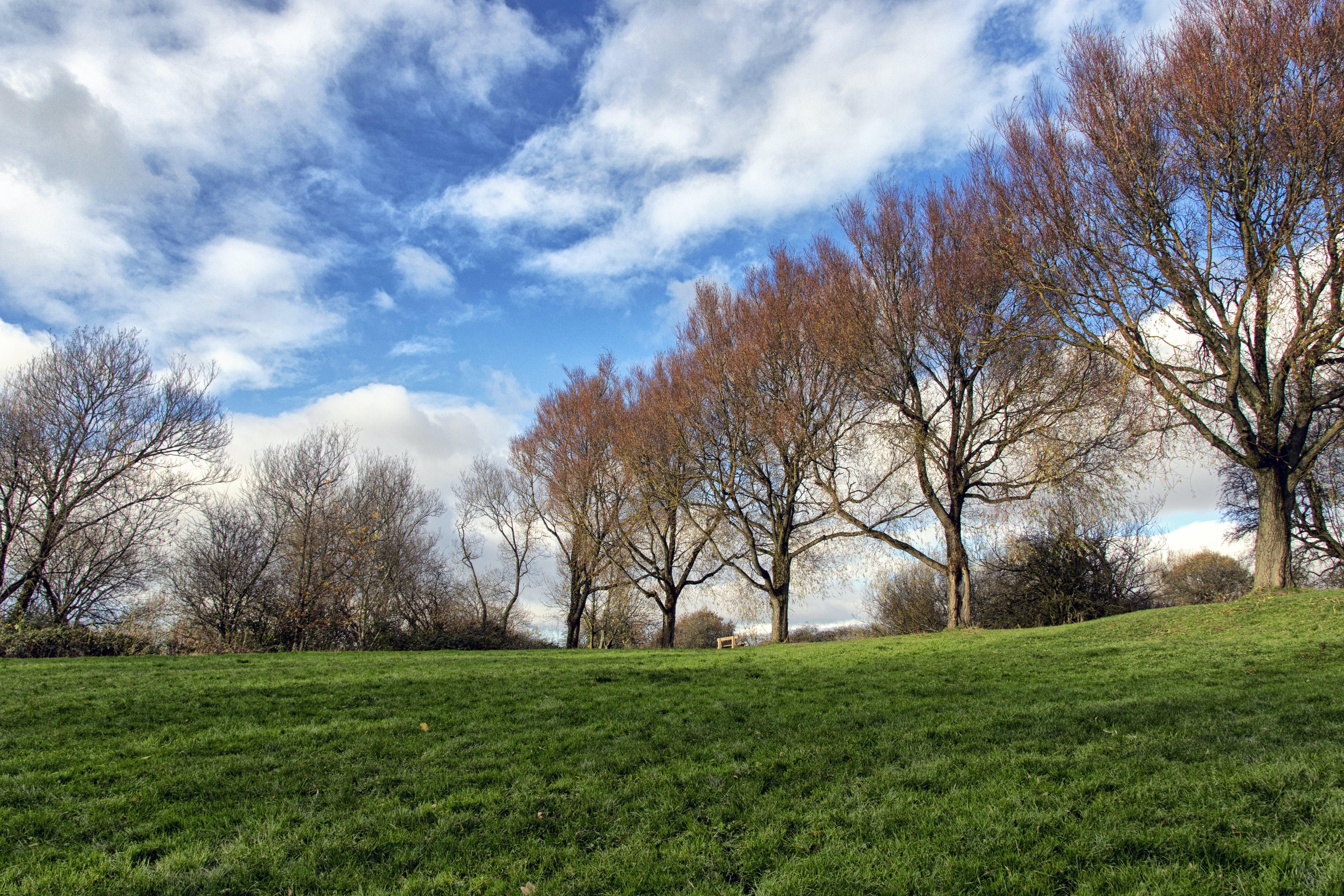 Free stock photo of dp, grass, nature, sky