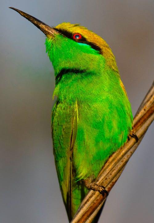 Bright green bird sitting on twig