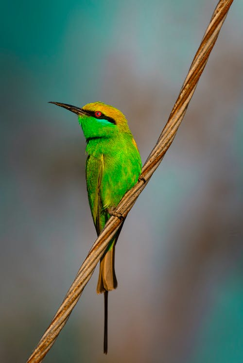 Colorful bird with colorful feathers on branch