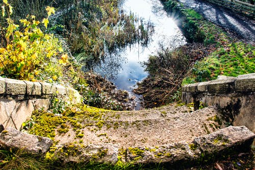 Imagine de stoc gratuită din apă, iarbă, marginea daiselor, mușchi