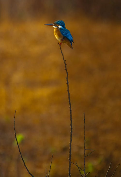 Side view of brightly colored bird kingfisher in order Coraciiformes in natural environment