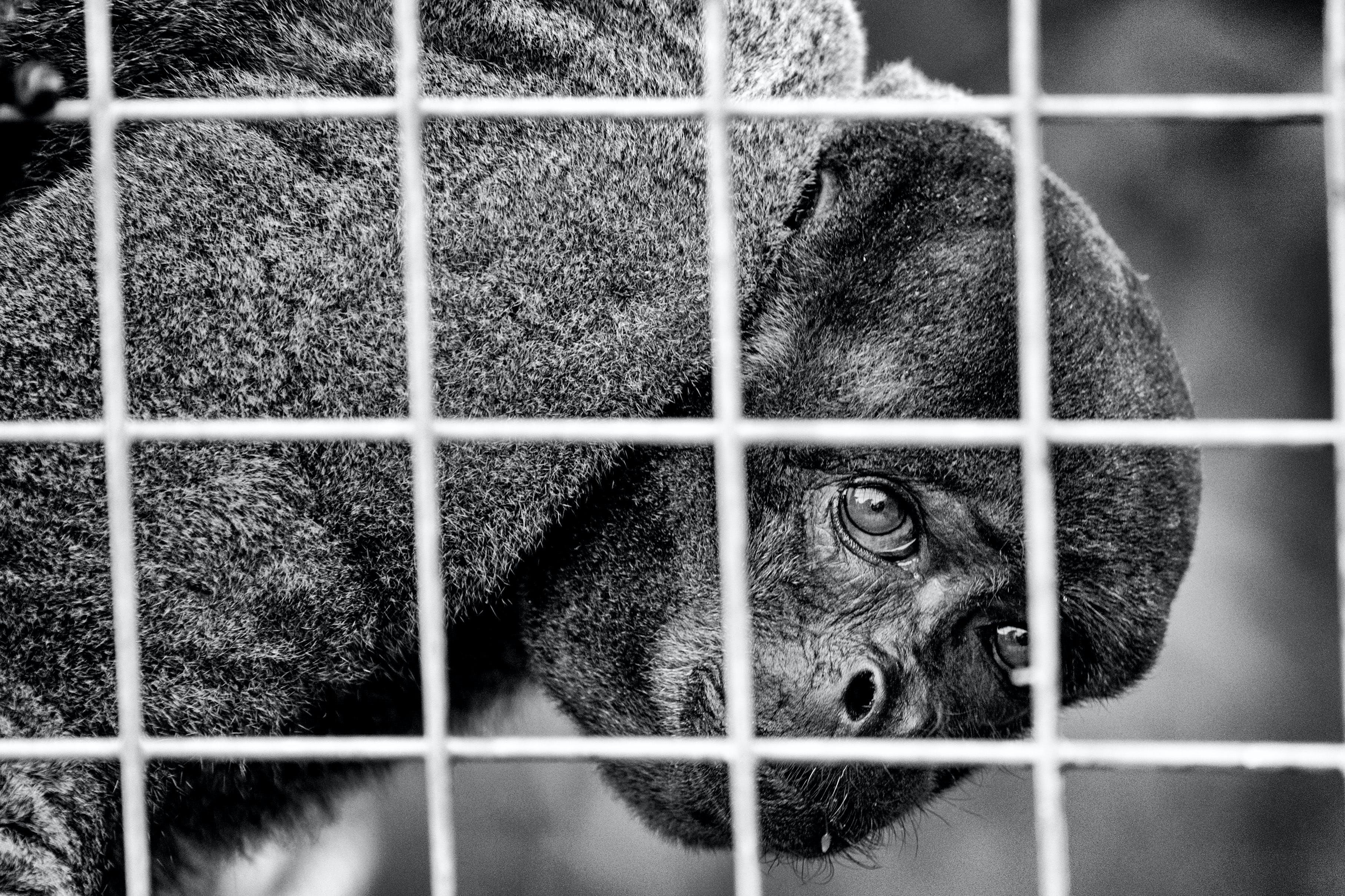 Grayscale Photo of Animal