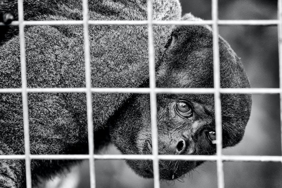 New free stock photo of animal, eyes, blur