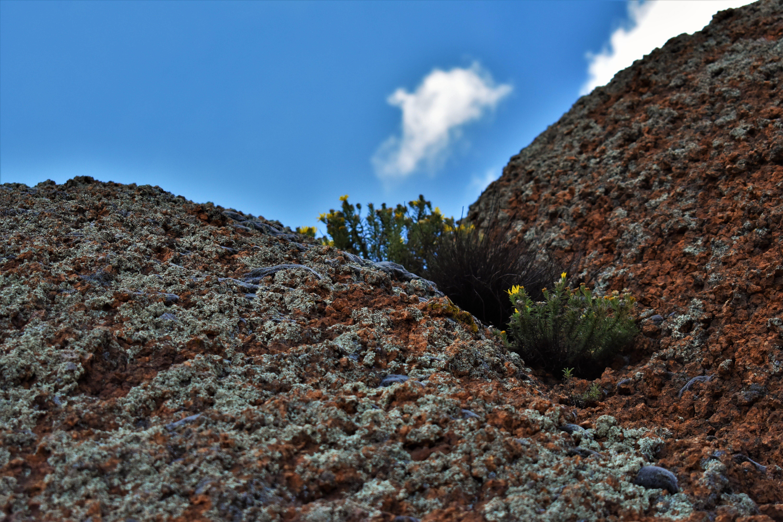 Free stock photo of blue sky, desert, flower, flowers
