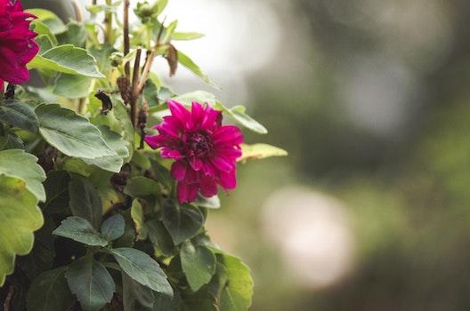 Free stock photo of nature, flower, green, beautiful flowers
