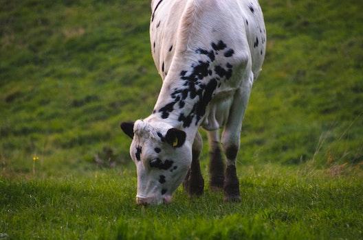 Free stock photo of nature, animal, grass, green