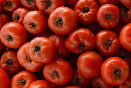 紅番茄水果在關閉攝影